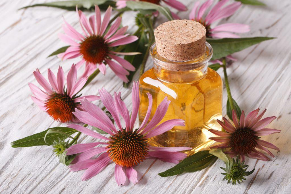 Echinacea - antibiotikum z prírody