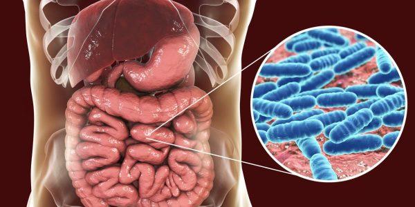 detail na črevo a žalúdočný mikrobióm